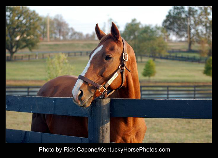 Danthebluegrassman, the horse - Photo by Rick Capone