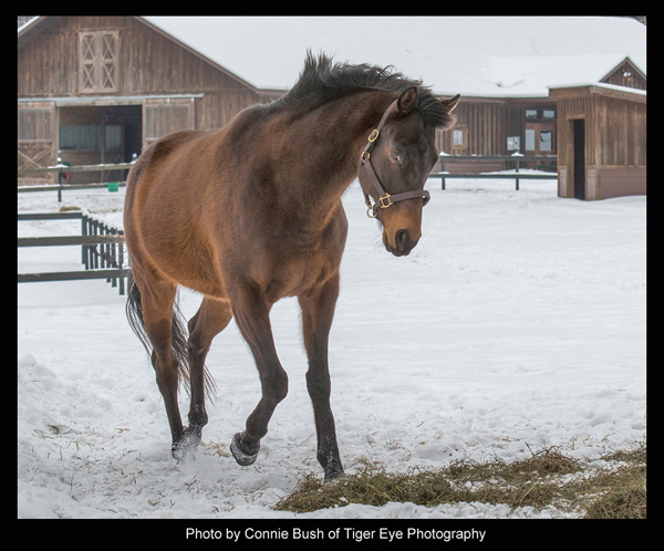 King Congie, the horse - photo by Connie Bush of Tiger Eye Photography