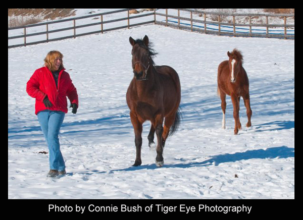 Mr. Cowboy, the horse - Photo by Connie Bush of Tiger Eye Photography