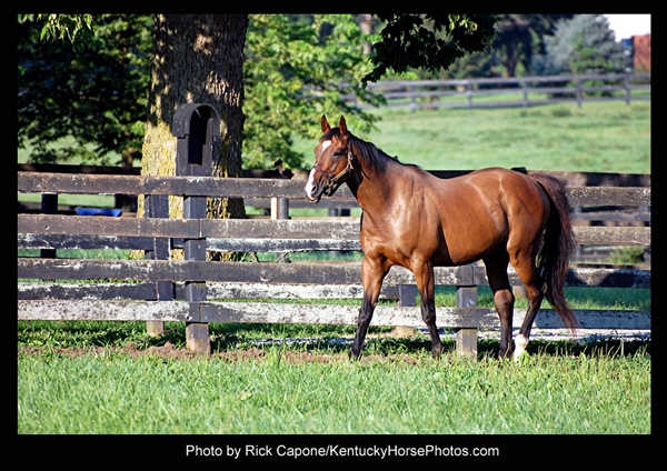 Nicanor, the horse - Photo by Rick Capone