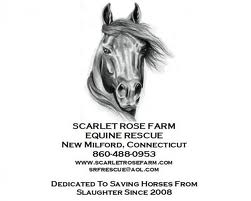 Scarlet Rose Farm Equine Rescue