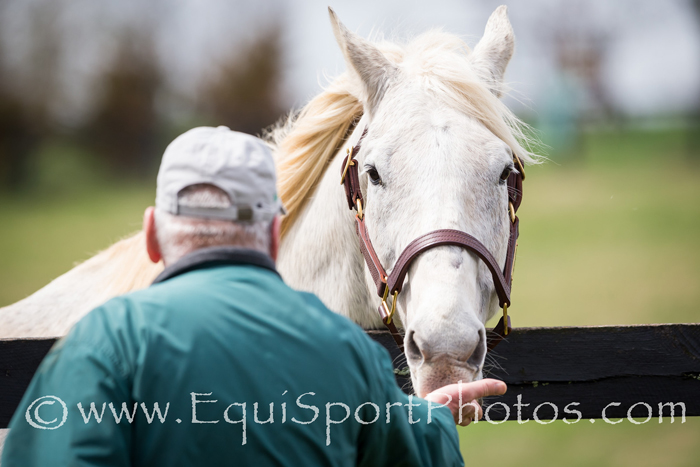 Silver Charm, the horse  - Photo by EquiSport Photos