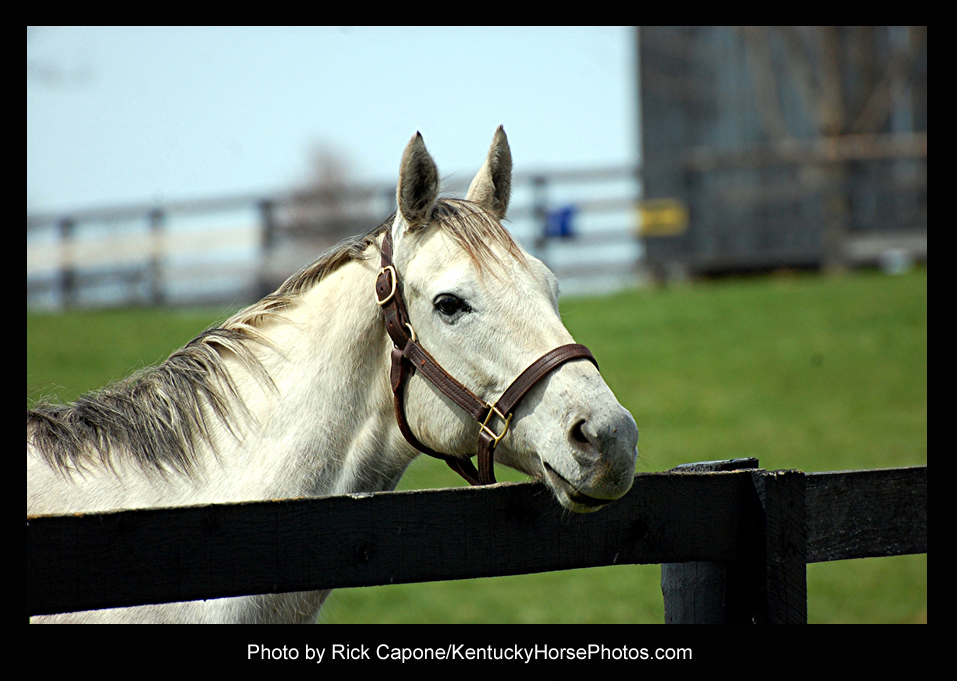 Yankee Fourtune, the horse  - Photo by Rick Capone