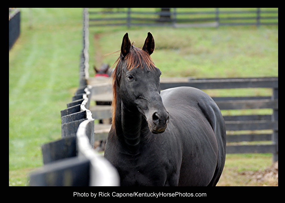 You and I, the horse  - Photo by Rick Capone