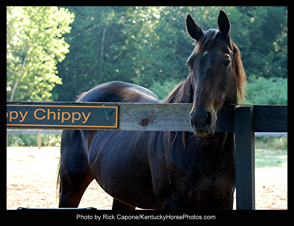Zippy Chippy, the horse - Photo by Rick Capone