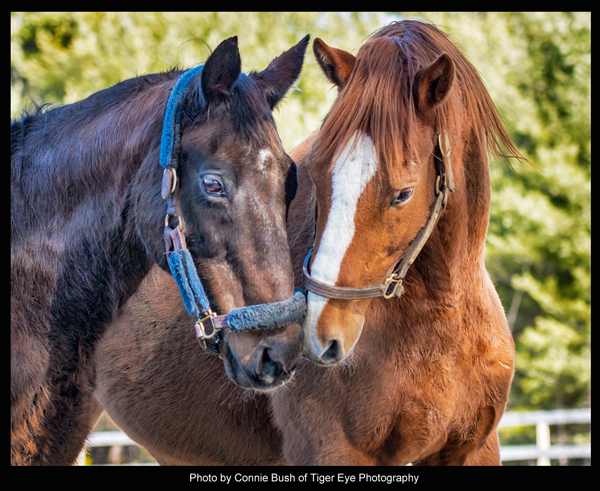 Zippy Chippy, the horse, with his buddy Red Down South - Photo by Connie Bush of Tiger Eye Photography